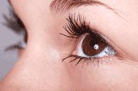 What are eyelashes?